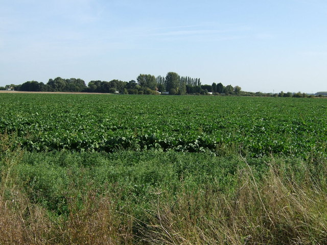 Crop field off Coningsby Road