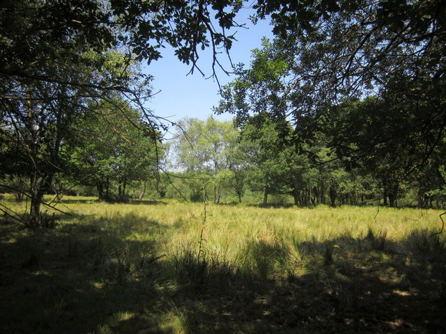 Open woodland, Great Meadow Copse