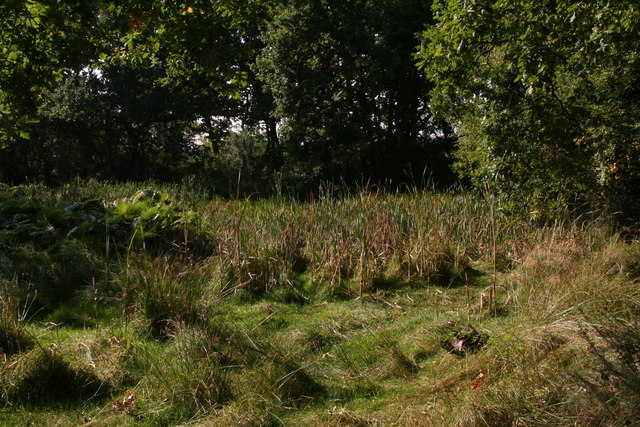 Boggy corner on East Winch Common