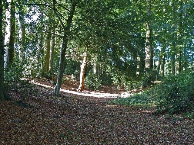 Cholesbury Camp (1) - Shallow external ditch at SW