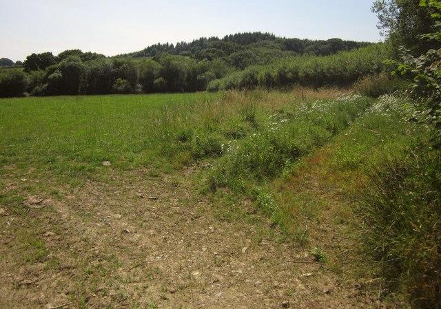 Field near Cuddenhay Moor