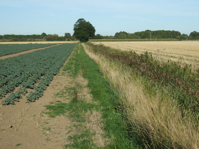 Footpath towards the River Witham