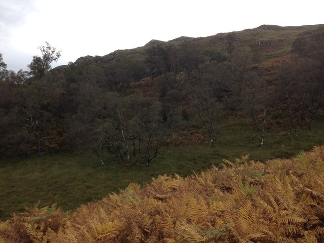 Partly wooded slopes of Cruach a Ghaill