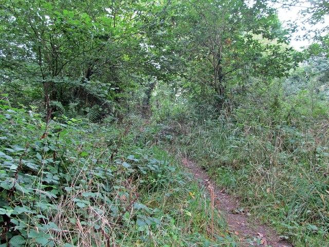 Ebbor Wood Footpath