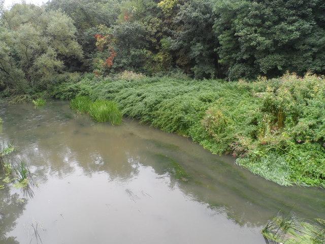River Mole from Downside Bridge