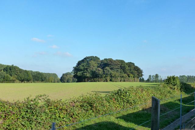 Tree clump near Bure Valley Railway and Path