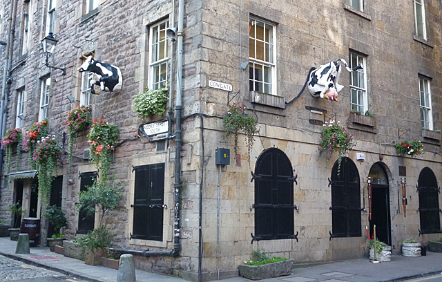 Cow in the Cowgate