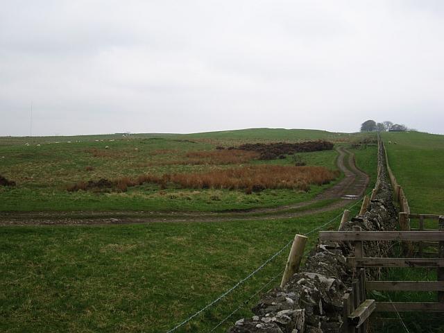 Track and dyke, Whitmuir