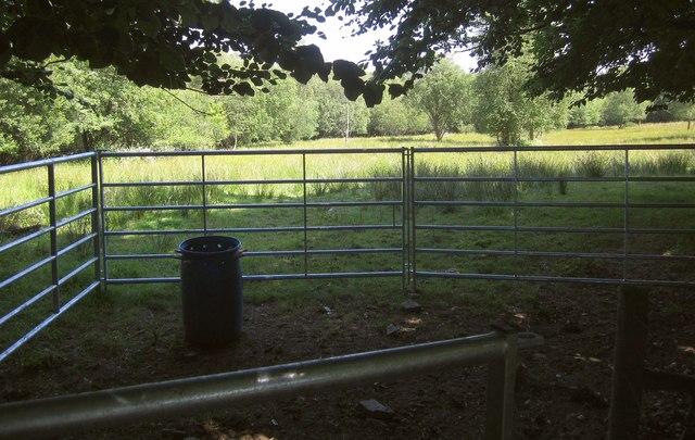 Pen and trees near Cuddenhay Farm