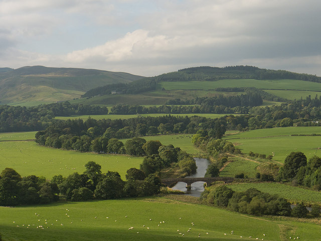 Sheep in meadow above the Tweed
