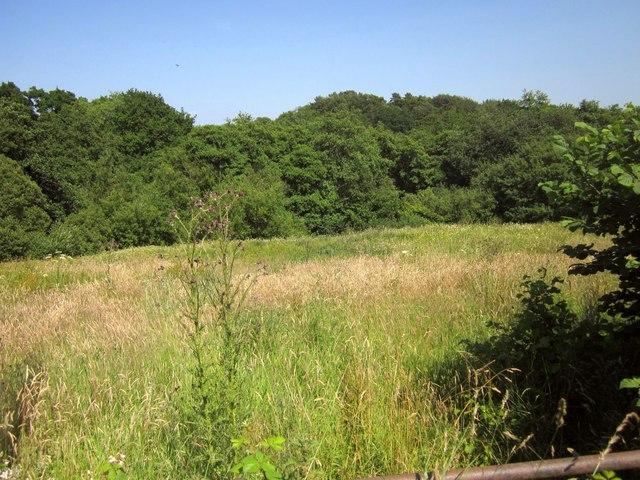 Rough grazing near Cuddenhay Farm