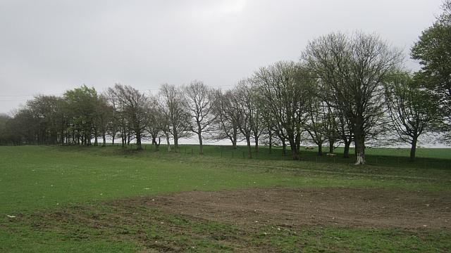 Stripwood on Selkirk Common