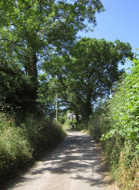 Trees at Lutworthy