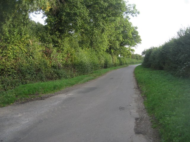Summer Down Lane