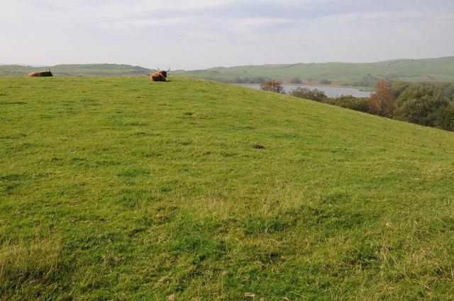 Highland cattle near Llyn Mawr