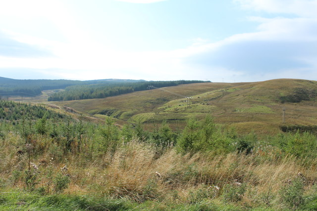 Forestry near Brown Hill