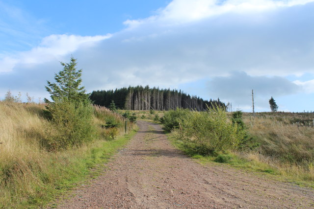 Forest Track to Clauchrie Hill