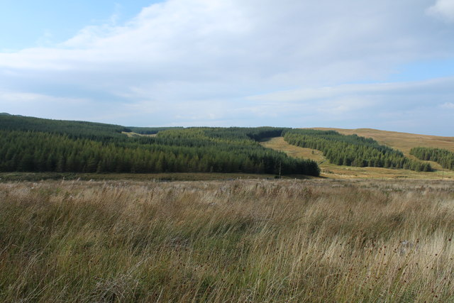 Forestry on Wee Knockinculloch
