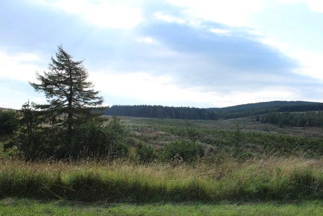 Woodland near Diel's Elbow