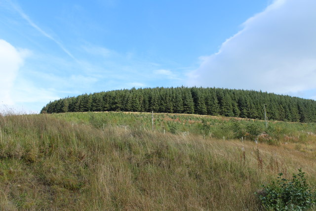 Forest on Clauchrie Hill