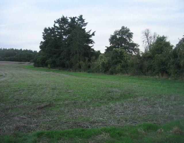 Harvested oilseed rape field