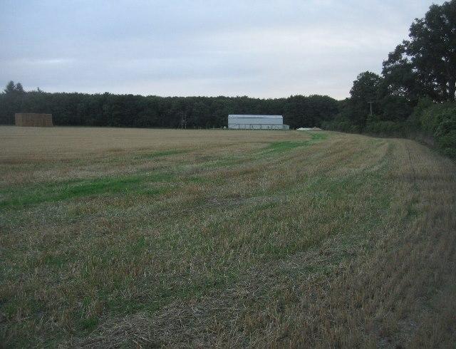 Fields by Bull's Bushes Copse