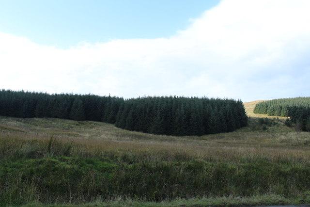 Woodland near The Pilot