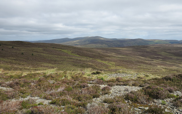Heather moorland in the Berwyns