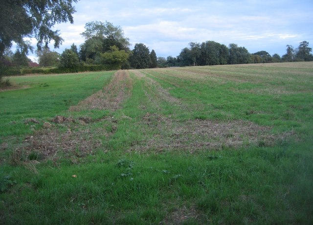 Field east of Trenchard Lane