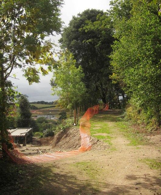 Tracks at Aller Orchard Wood