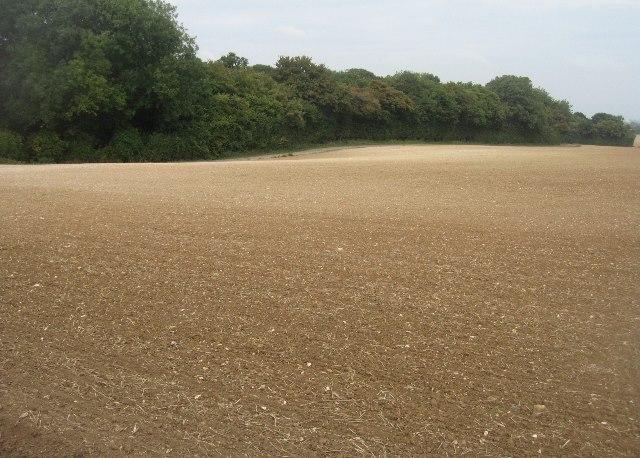 Little Wildcroft Field