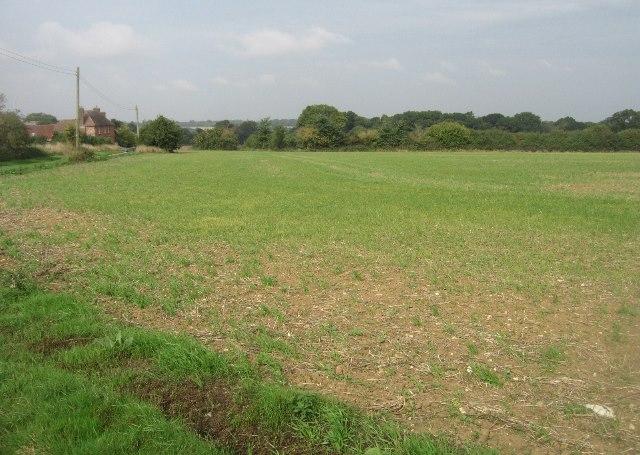 Emerging crop - Danny Field