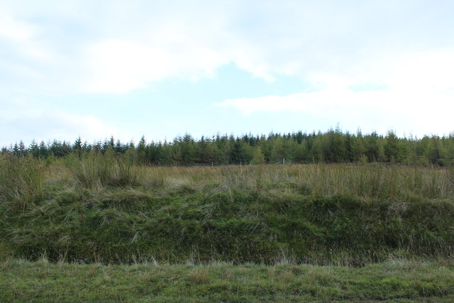 Forest on Black Hill of Garleffin