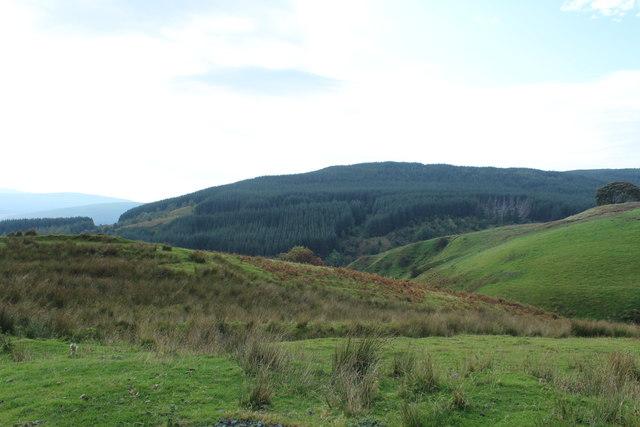 Forest on Daljedburgh Hill