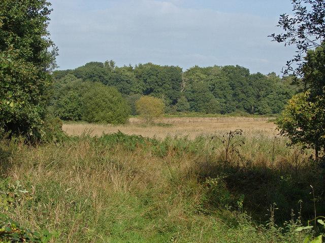 Disused farmland, Broadmoor