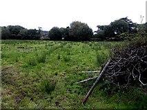 H1319 : Rushy ground, Corrachomera by Kenneth  Allen