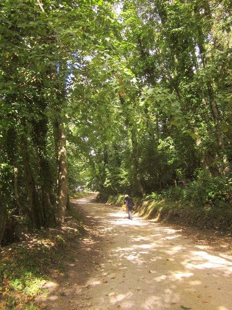 Track, Aller Orchard Wood