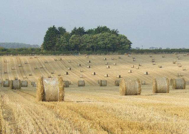 Stubble field off Bempton Lane