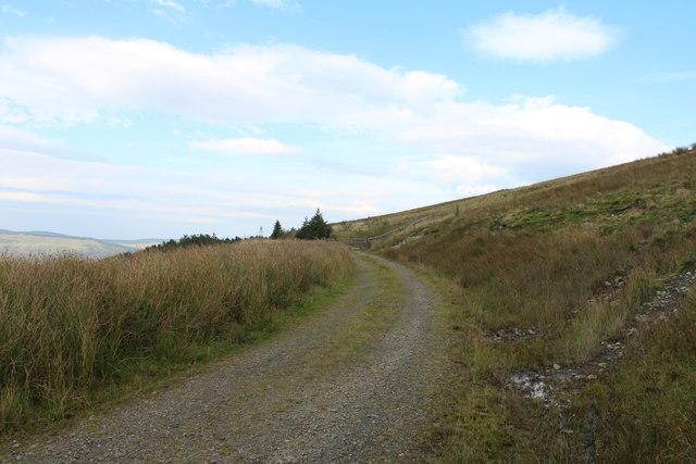 Forest Track into Balloch Plantation