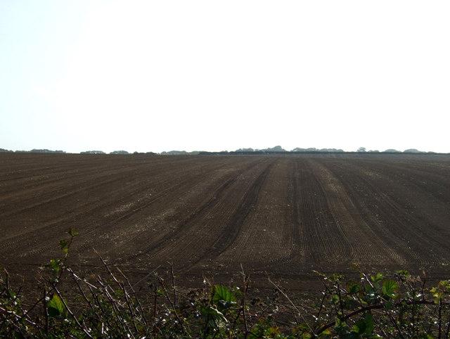 Farmland off Stonepit Lane
