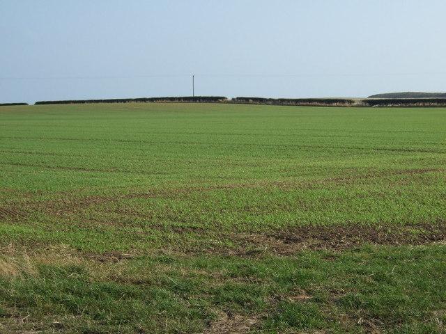 Farmland, Wandale Farm