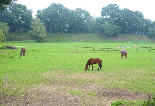 Horses at Fold Farm