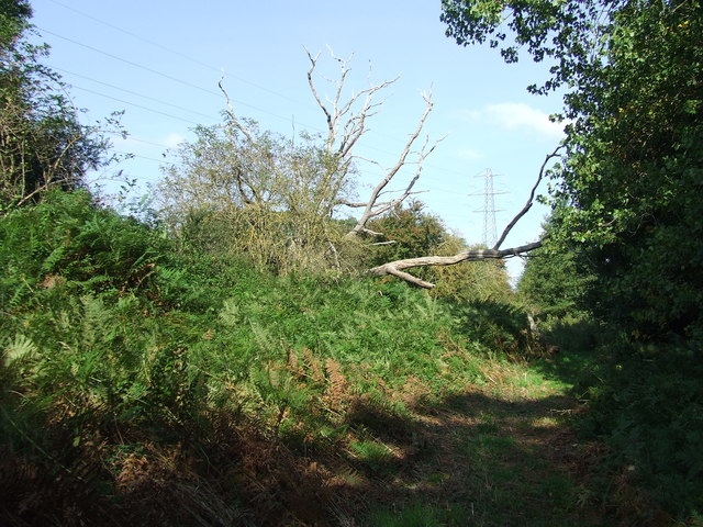 Footpath And Dead Tree
