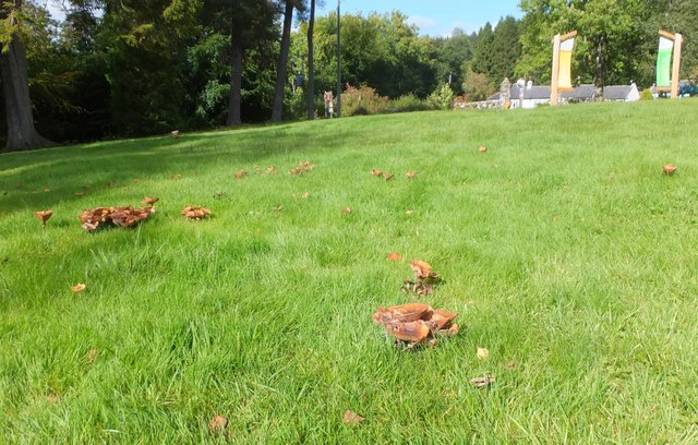 Mushrooms in the grass by the picnic site