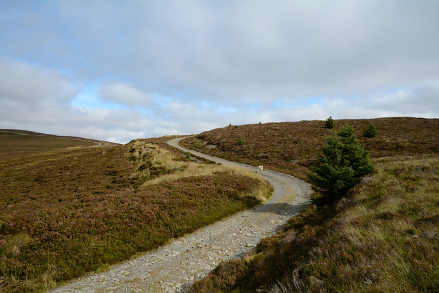 Estate road at head of Cwm Bychan