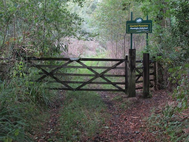 Entrance from Glan-Rhyd Road into Glan-rhyd Plantation