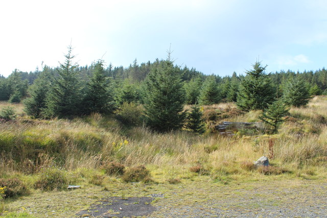 Woodland on Rowantree Hill