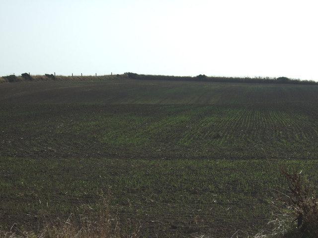 Crop field, The Moor