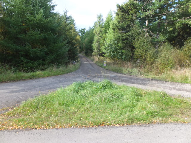 Forest track, Kielder