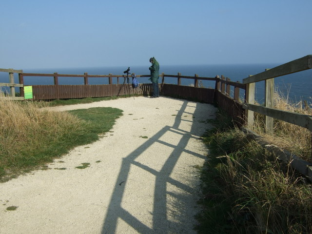 Viewing area, RSPB Bempton Cliffs
